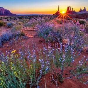 Monument Valley Wildflower Sunrise