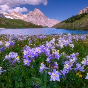 Blue Lakes Columbines