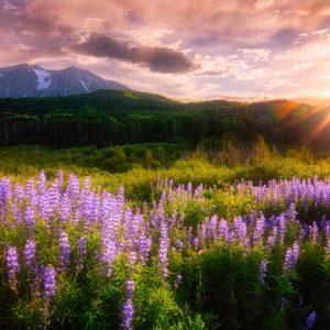 Kebler Pass Wildflower Sunset