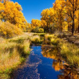 Gunnison Fall Foliage