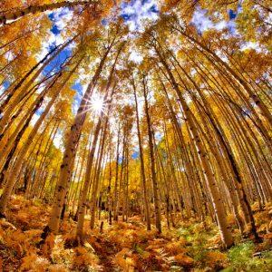 Kebler Pass Fall Foliage