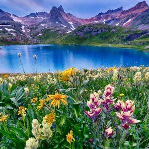 Ice Lake Wildflowers