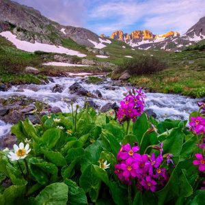 American Basin Wildflowers