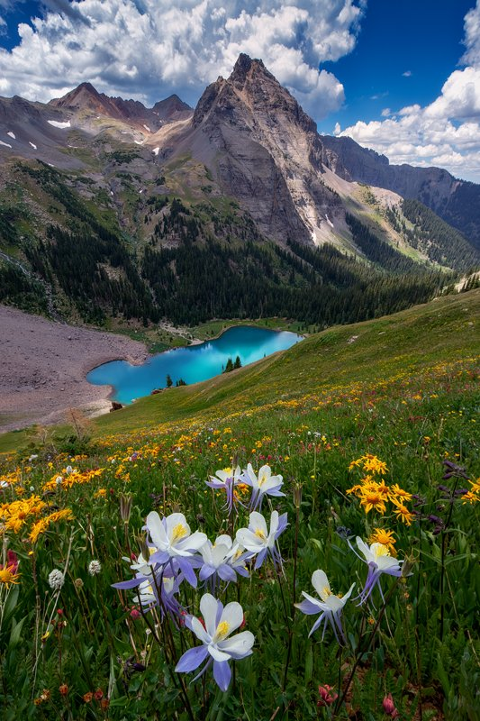 Blue Lakes Columbines