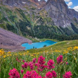 Blue Lakes Wildflowers