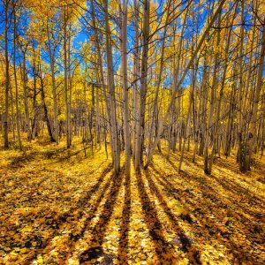 Fall Foliage Sunburst