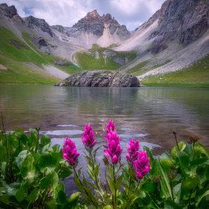 Island Lake Wildflowers