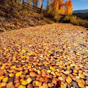 Fall Foliage Carpet