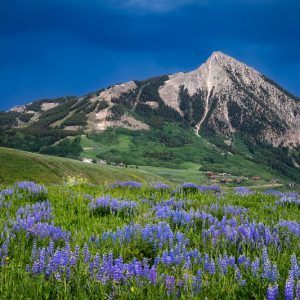Mount Crested Butte Wildflowers