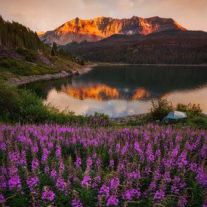 Trout Lake Wildflower Sunset