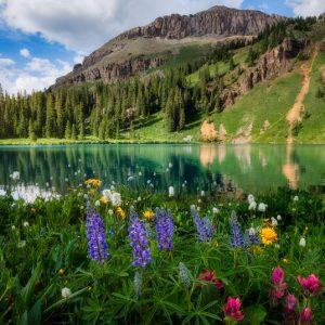 Blue Lakes Wildflowers