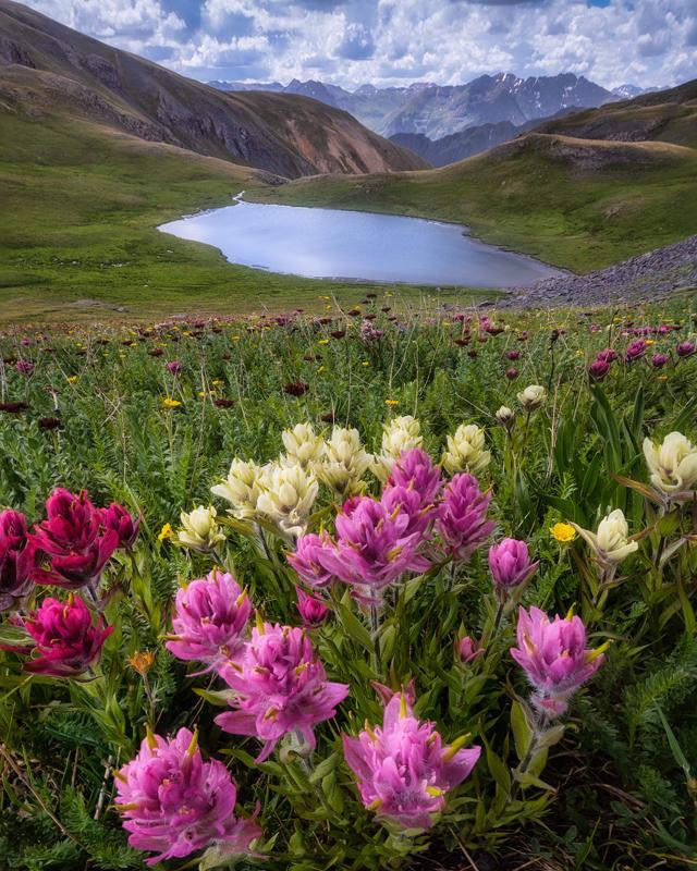 San Juan Mountain Wildflowers