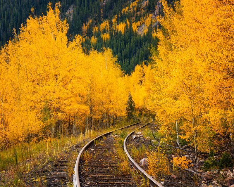 Fall Foliage Tracks