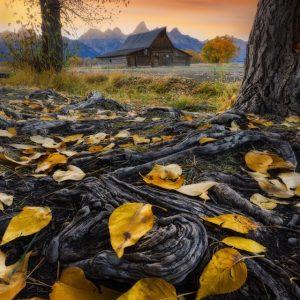Moulton Barn Autumn