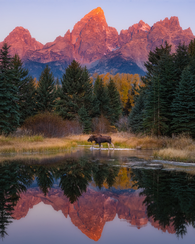 Schwabacher Landing Sunrise Moose